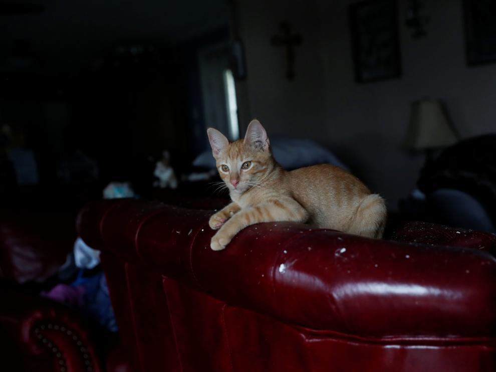Un gato en una casa de Lousiana, este viernes en Estados Unidos,