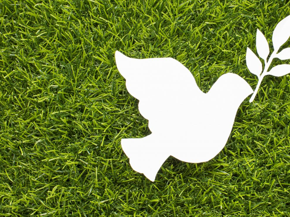 Los niños pueden pintar la paloma de la paz de cualquier color para entender que todos podemos ser pacíficos.