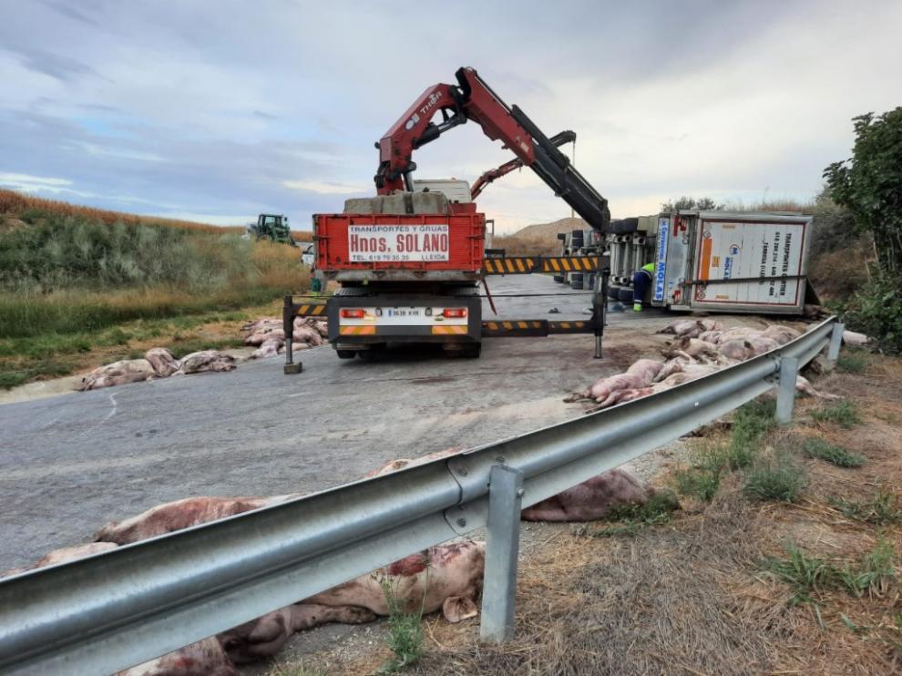 Tras retirar la caja del camión, sobre las 9.00 la empres SARGA procedía a la retirada de los cerdos muertos