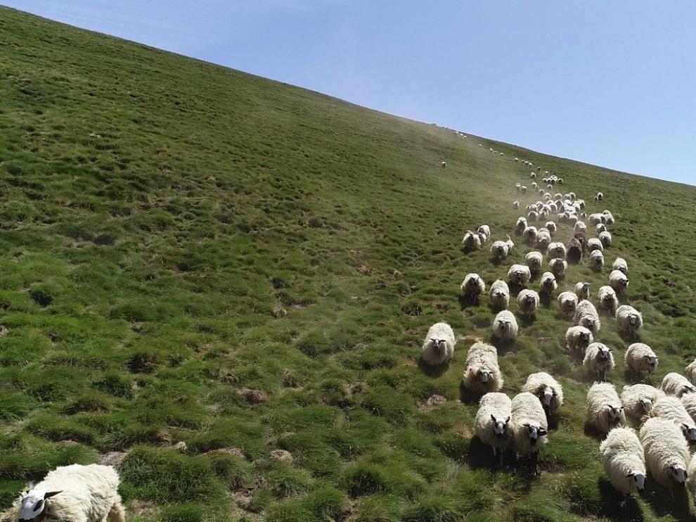 Pastores desde el cielo