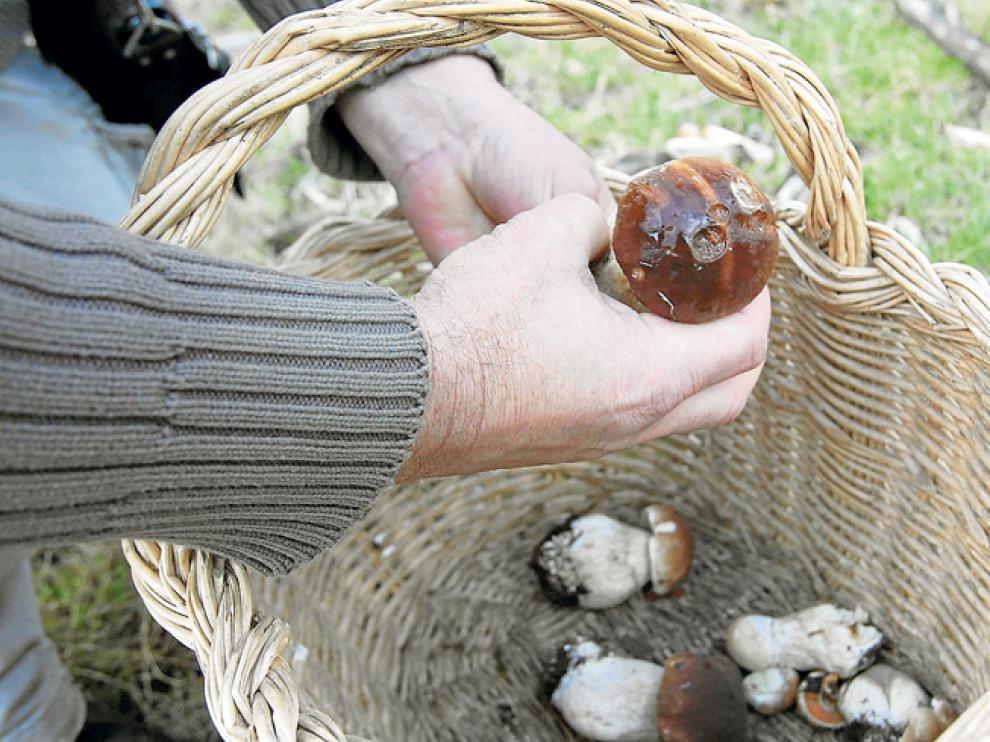 Foto de archivo de una jornada de recogida de setas