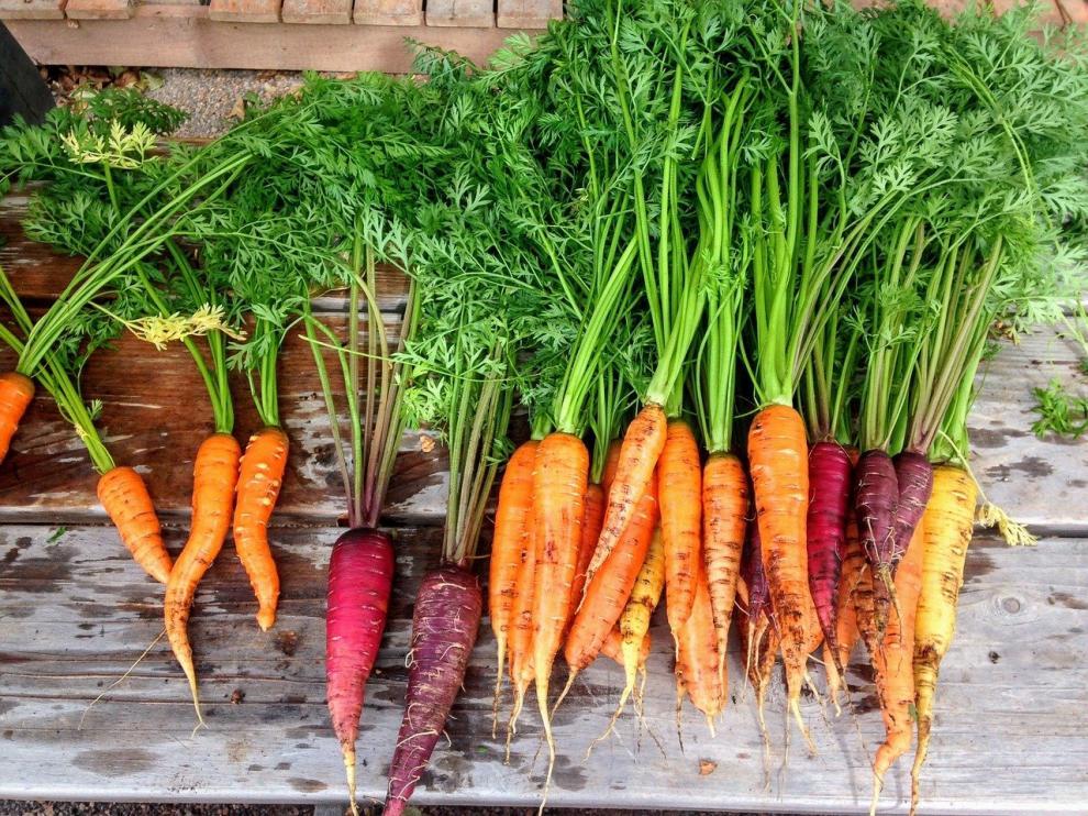 Huertos urbanos: recolección de zanahorias.