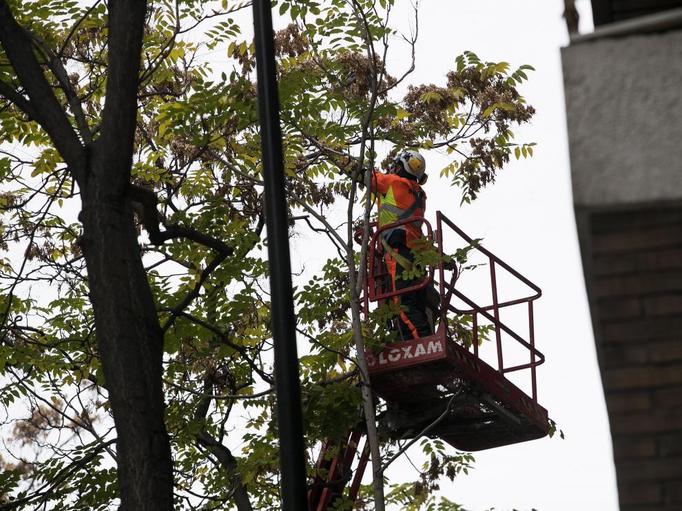 El Ayuntamiento ha intensificado las labores de poda en los parques y calles de la ciudad.