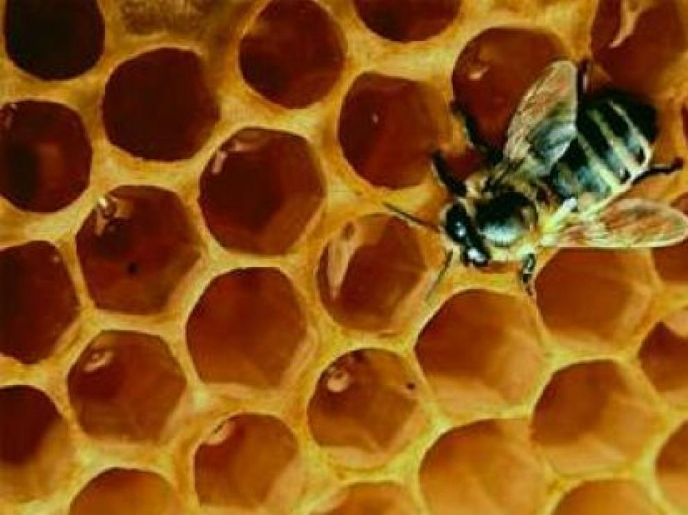 Las mieles de Teruel tiene fama de calidad porque proceden de floraciones muy demandadas. Laura Uranga