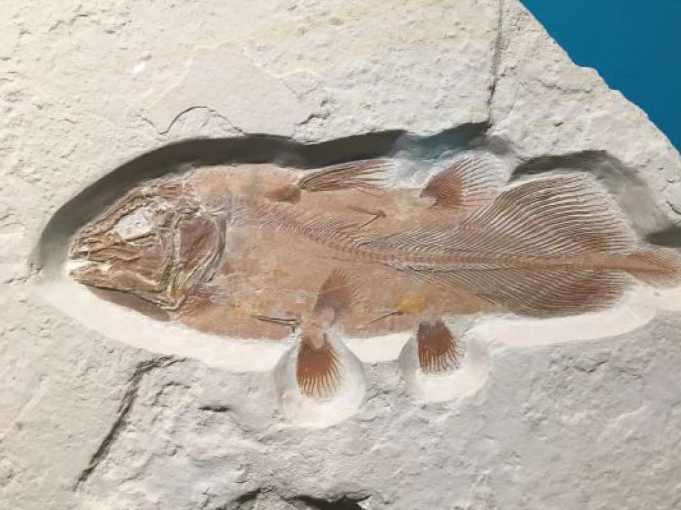 Un enorme pez antiguo, descubierto por casualidad.