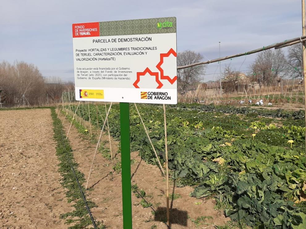 Parcela de ensayo del proyecto Hortaliza-Te, centrado en hortalizas y legumbres tradicionales de Teruel.