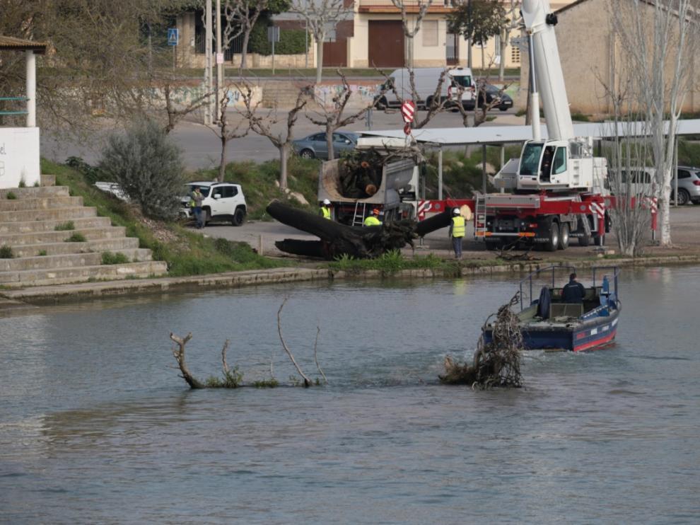 Retirada de troncos del campo de regatas de Mequinenza