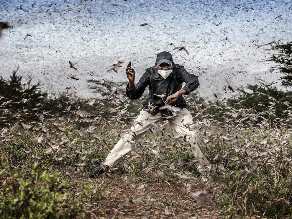 Luis Tato opta al máximo galardón con una fotografía sobre la mayor plaga de langostas del desierto keniano en 70 años