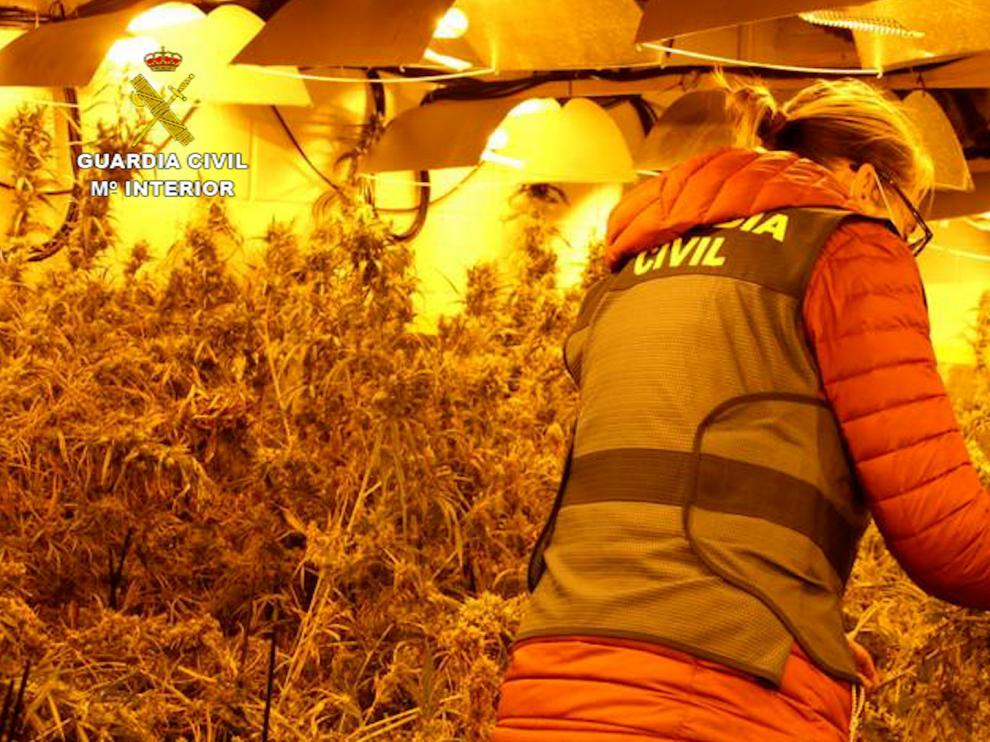 La Guardia Civil descubre 2.600 plantas de marihuana en tres naves cerca de Zaragoza