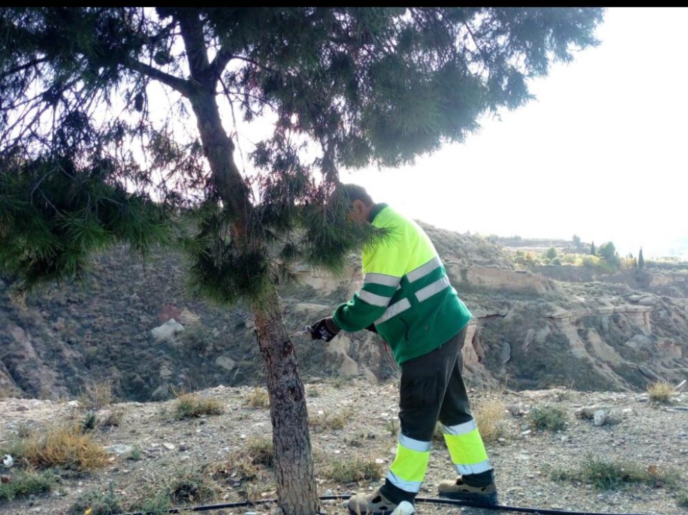 Reforestación en Fraga