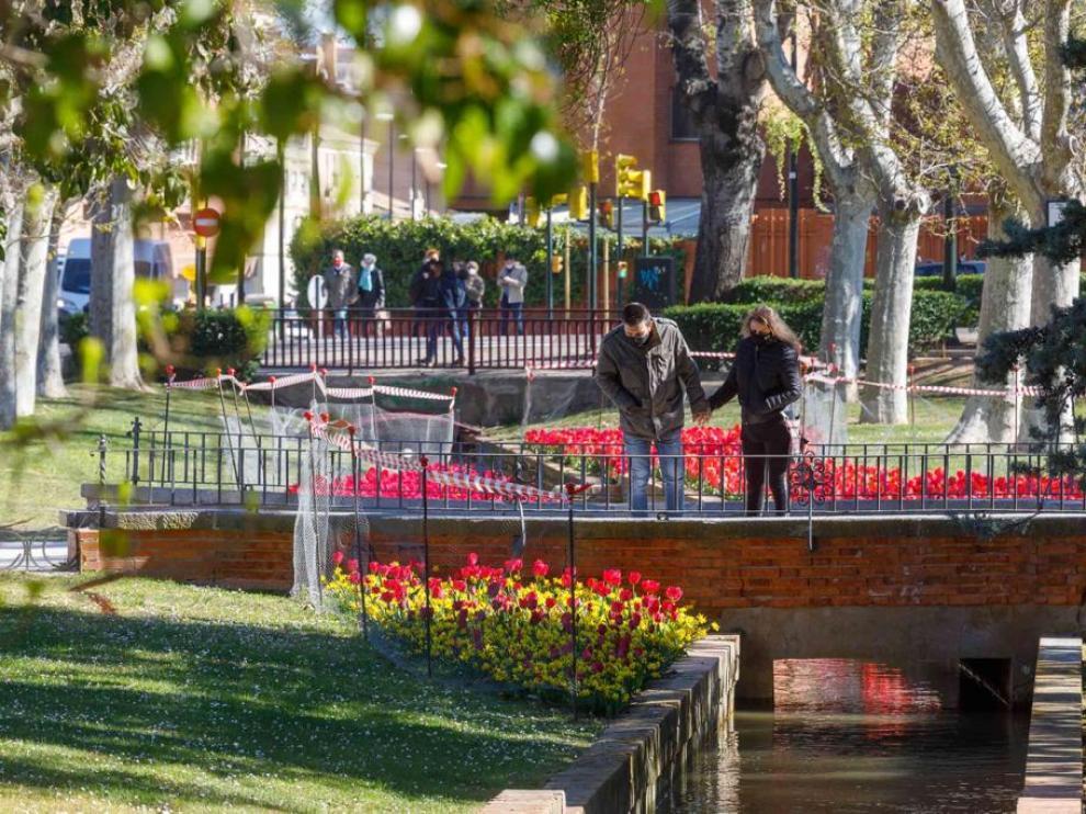 La alfombra de tulipanes, narcisos y azafranes del Parque Grande José Antonio Labordeta se ha convertido en una de las atracciones de la primavera, también en las redes sociales.