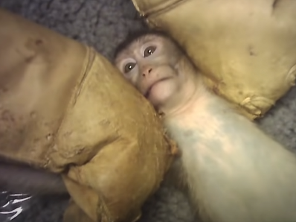 Fotograma del vídeo colgado por Cruelty Free