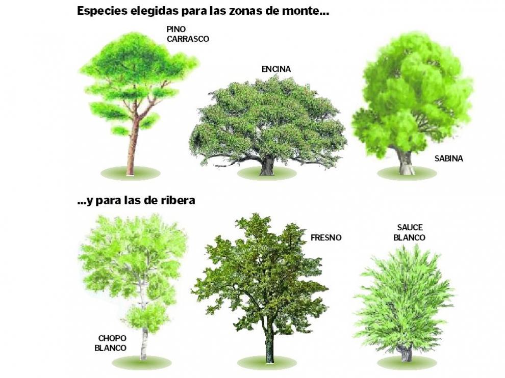 Especies seleccionadas para el proyecto de reforestación.