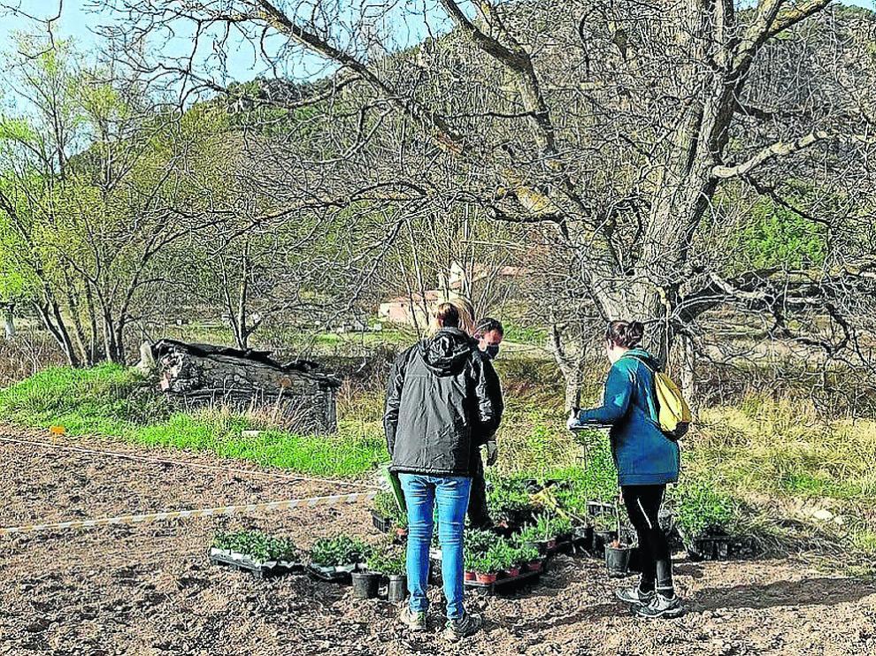 Preparación de la plantación de aromáticas y frutales en la parcela piloto de Montalbán.