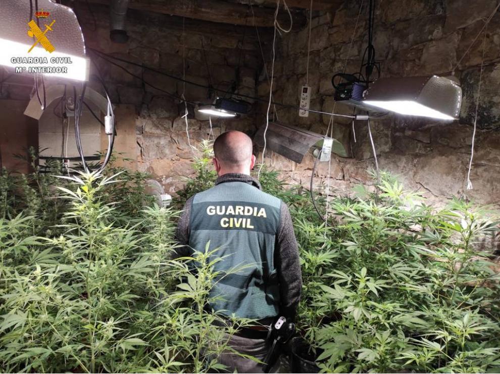 Operación de la Guardia Civil en Nonaspe, donde ha incautado más de 200 plantas de marihuana.