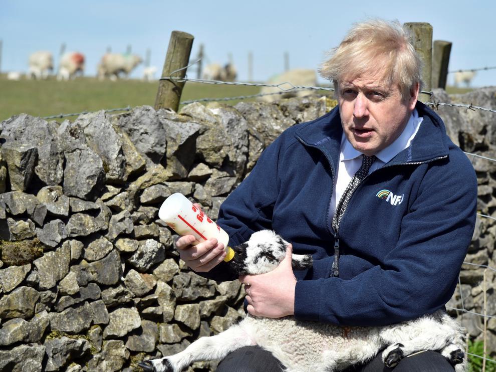 Boris Johnson alimenta a un cordero durante una visita a la granja Moor en Stoney Middleton dentro de la campaña electoral.