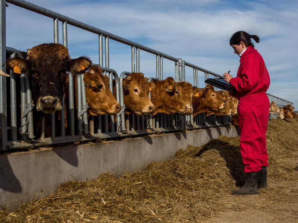 Las mujeres que se dedican profesionalmente a la agricultura y la ganadería tienen más arraigo al territorio.