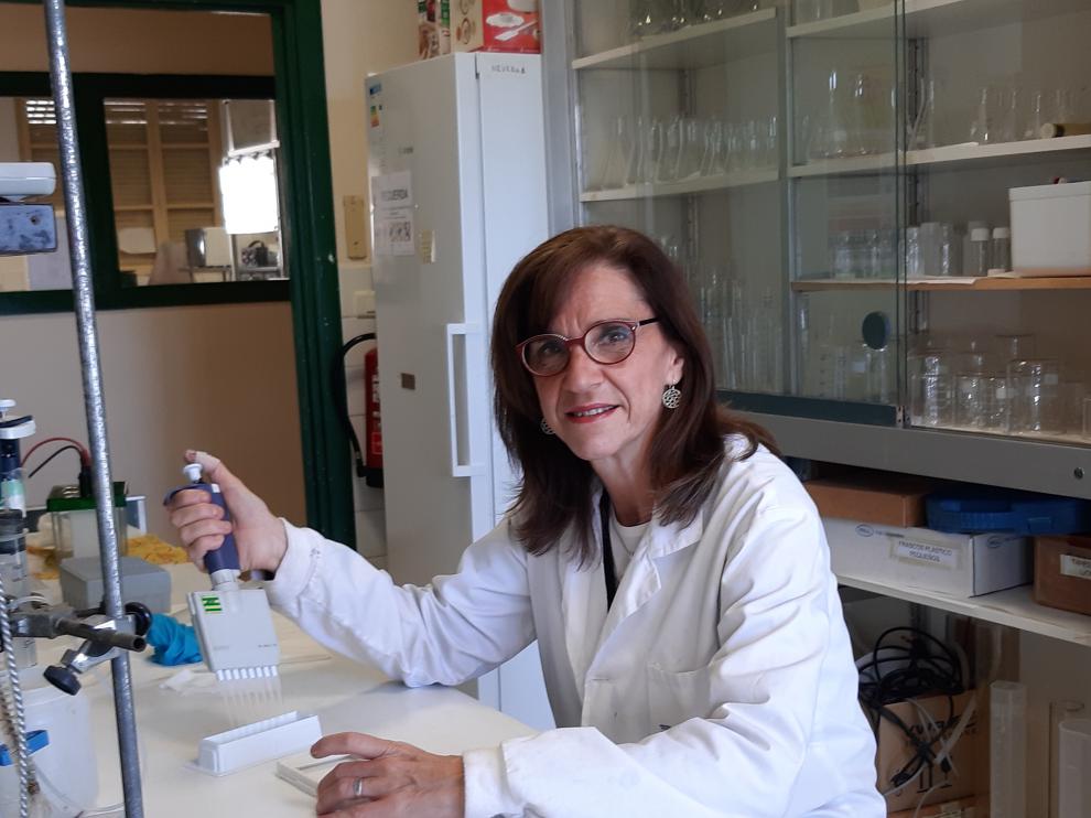 La catedrática de la Universidad de Zaragoza Mª Dolores Pérez Cabrejas es la investigadora principal de este proyecto.