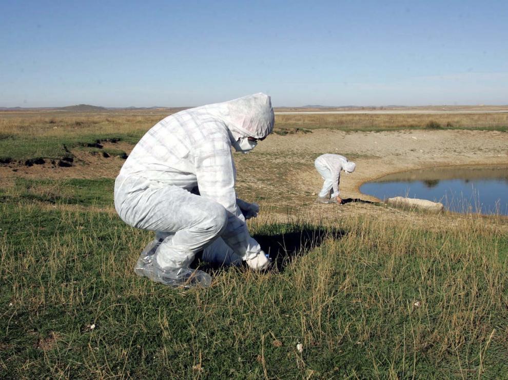 Análisis de prevención por la gripe aviar en la zona de la laguna de Gallocanta.