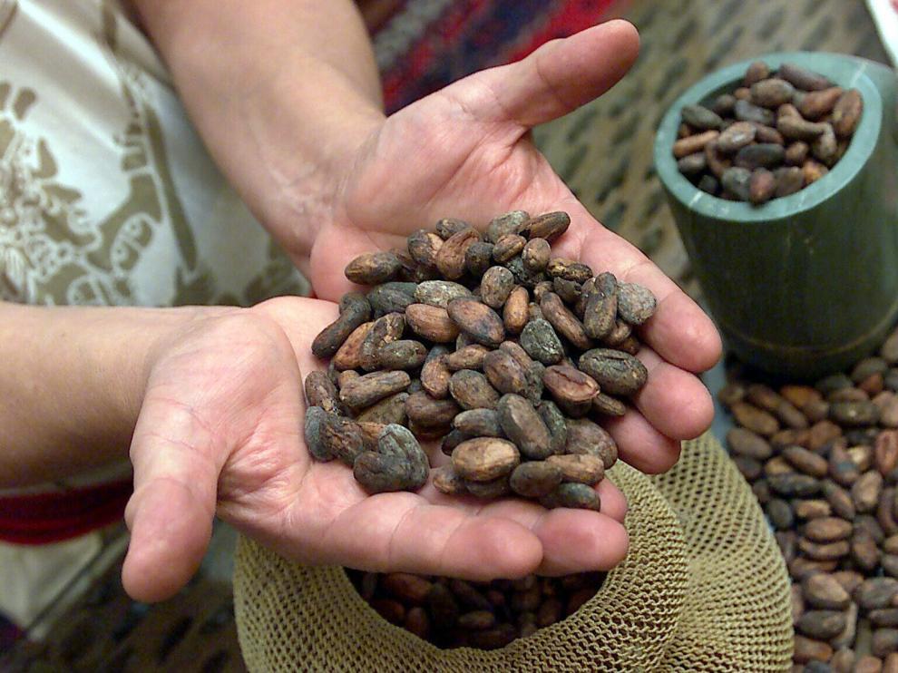 Dentro de cada fruto del árbol del cacao, se acumulan entre 30 y 40 semillas o granos.