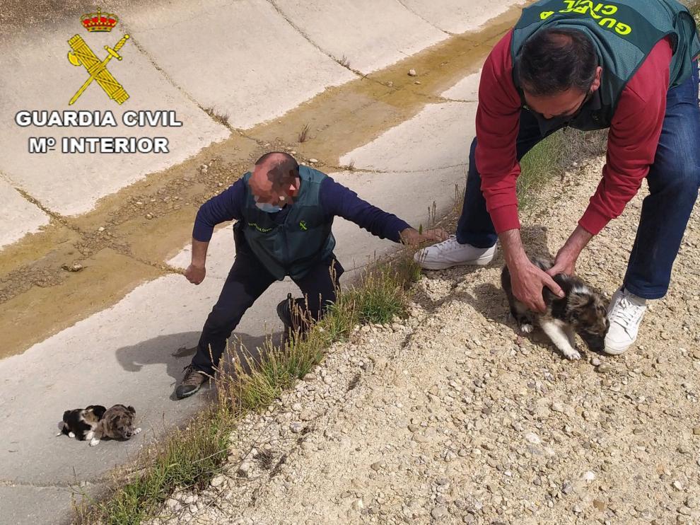 Un guardia civil rescata a los perros atrapados en el canal de la Estanca de Alcañiz.