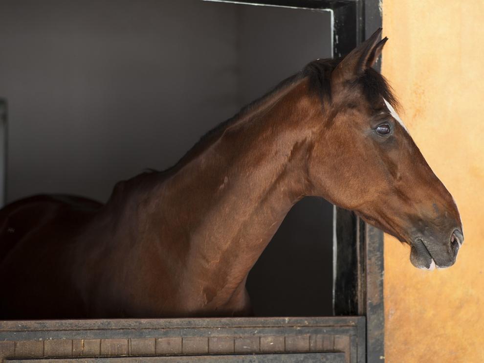 Foto de archivo de un caballo