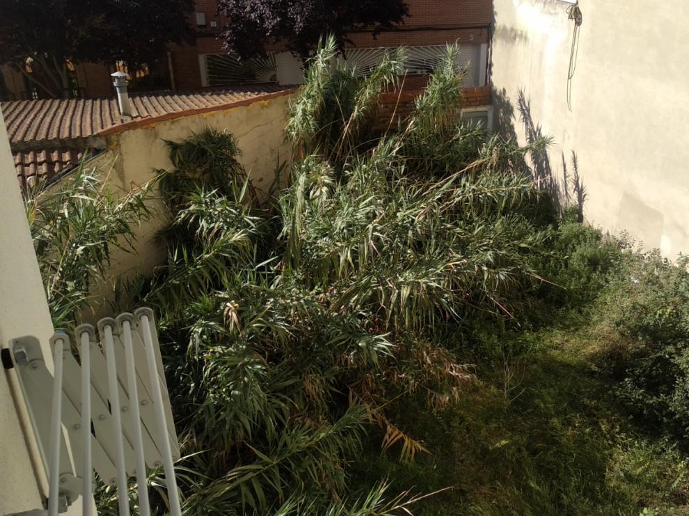 Los vecinos han vuelto a pedir que se limpie el solar de la calle Caracoles
