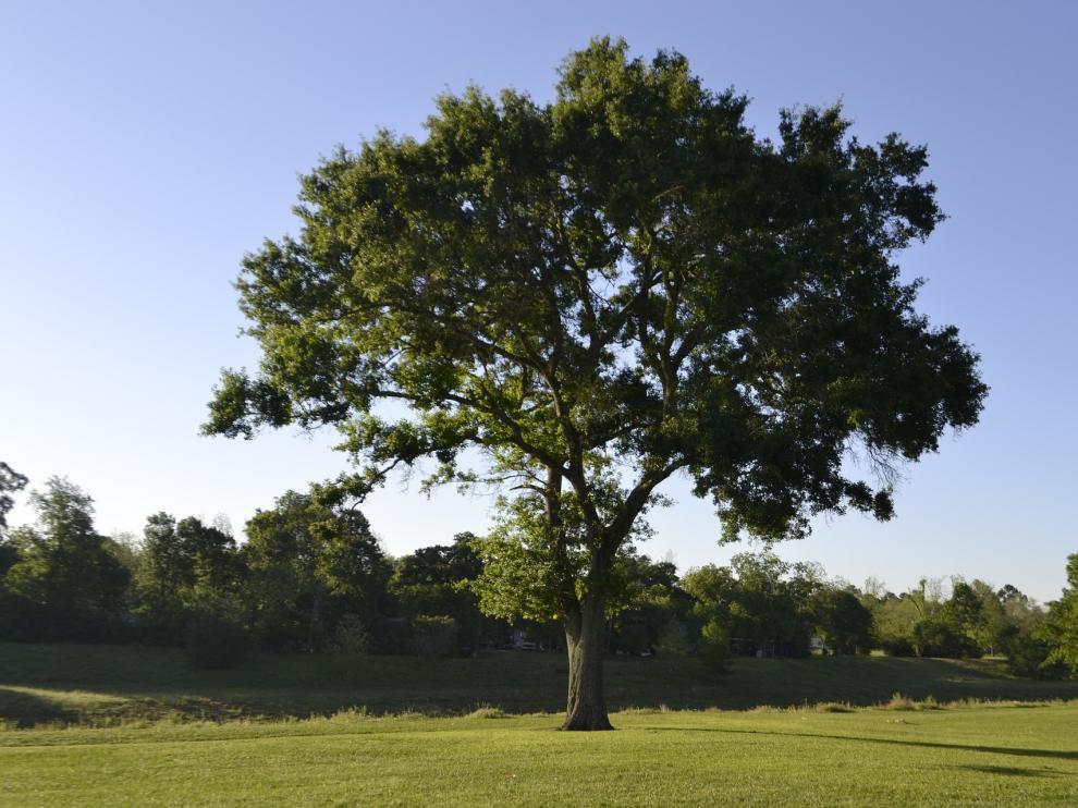 'Día mundial del árbol'