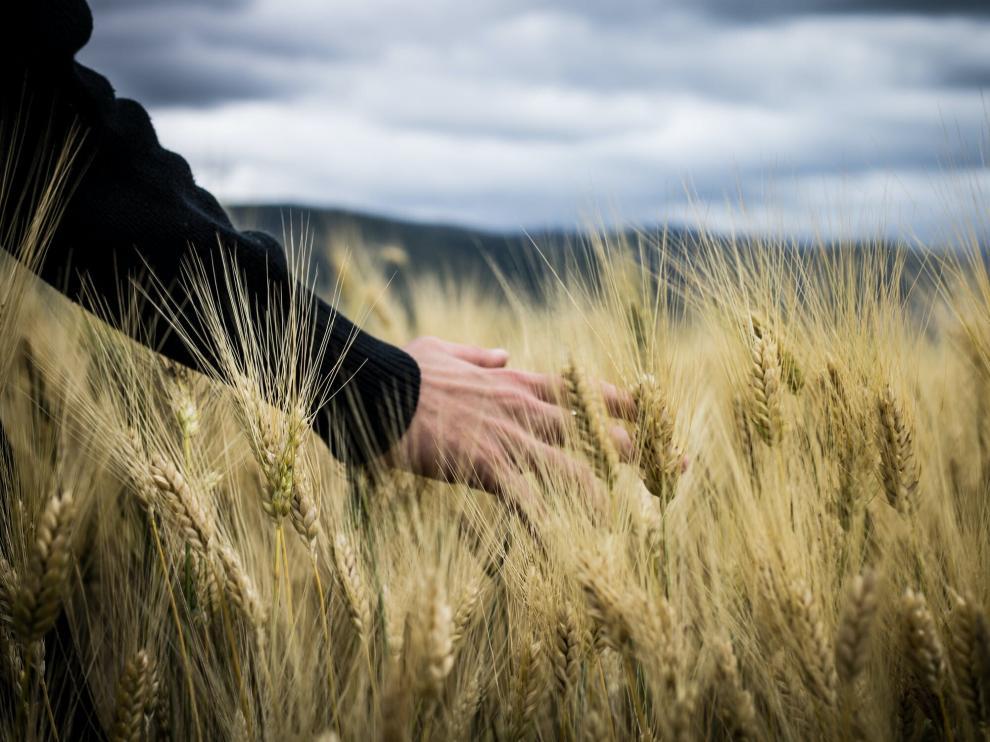 Los ingenieros agrónomos son profesionales multidisciplinares muy demandados en toda la cadena del sector agroalimentario.
