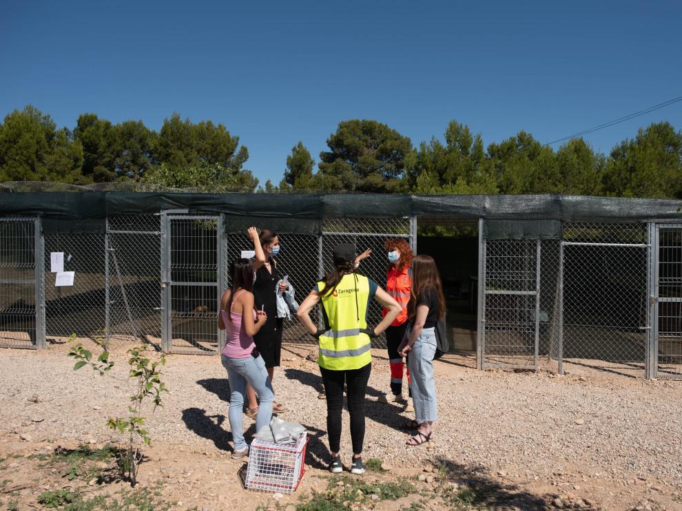 Traslado de gatos a las colonias felinas de El Guano, en Zaragoza