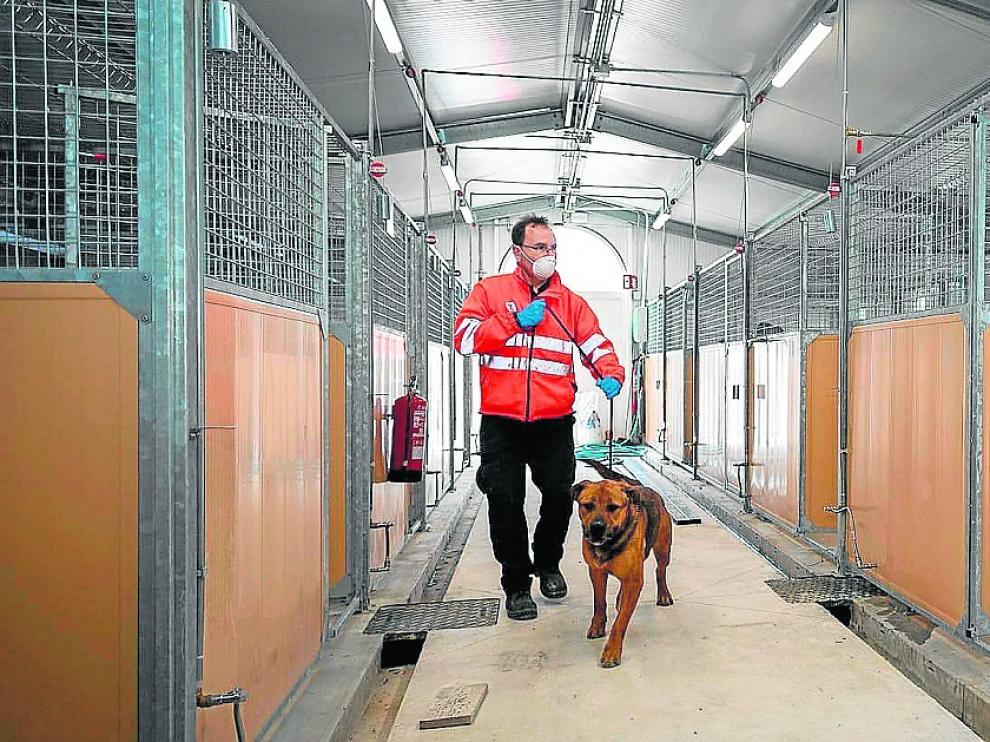 Un trabajador municipal conduce a un perro en las instalaciones del CMPA de Empresarium.