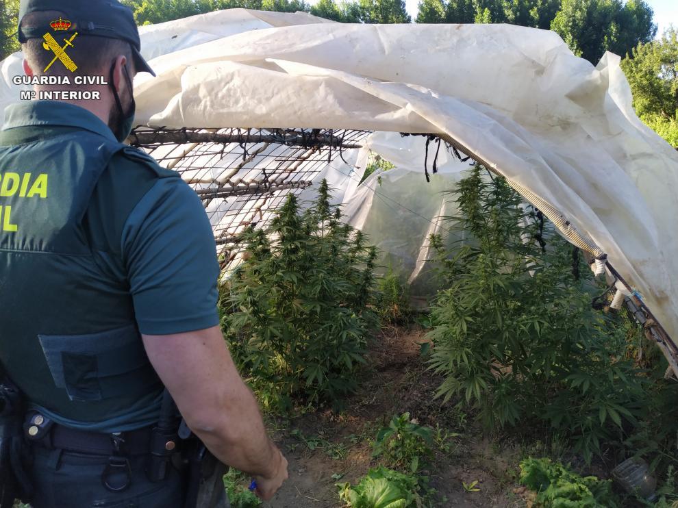 Cultivo de marihuana en Calomarde
