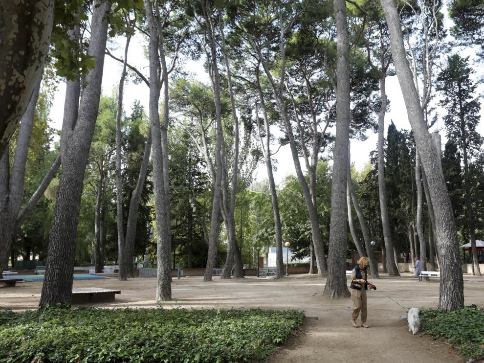La zona de pinares del Miguel Servet será una de las que restaurará la Escuela Taller del Ayuntamiento de Huesca.
