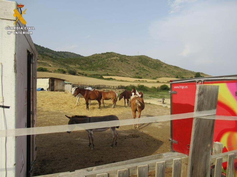 El Seprona detecta irregularidades en una explotación de caballos de Isuerre que ofertaba actividades juveniles sin permiso.