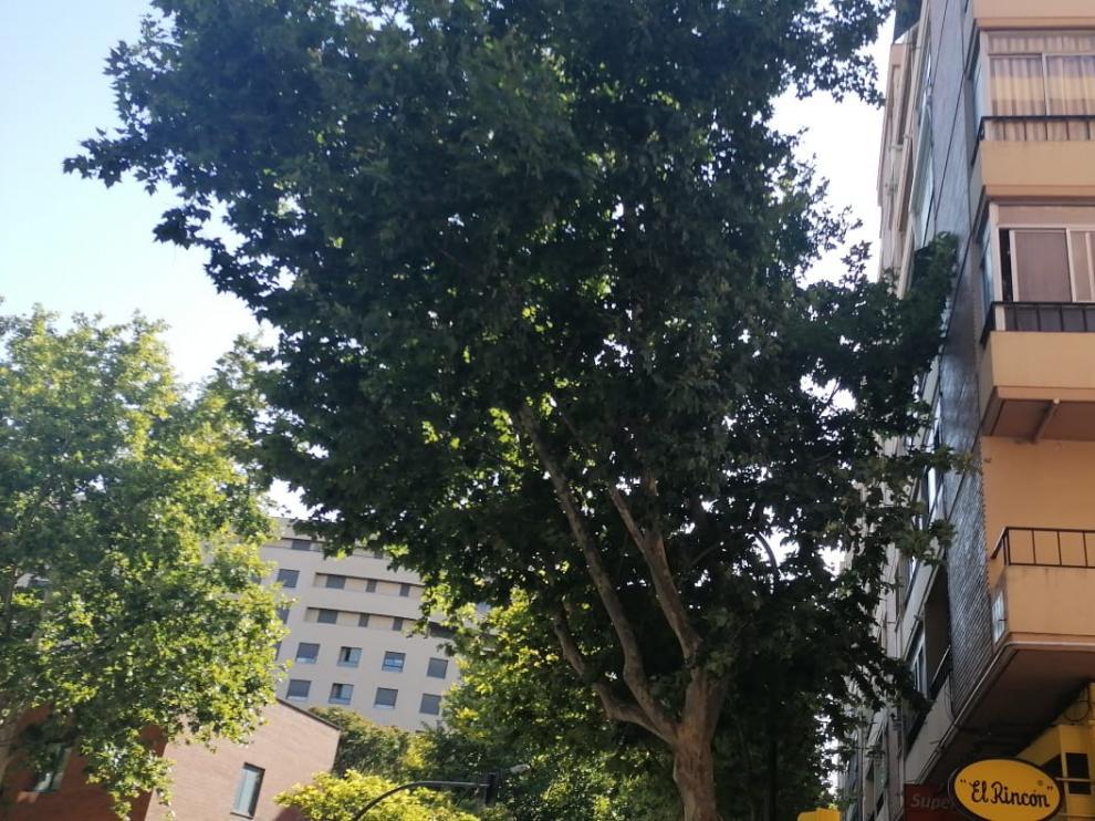 Las ramas de los árboles que llegan hasta las ventanas.