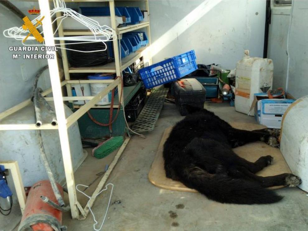 En la imagen, uno de los perros del acusado.