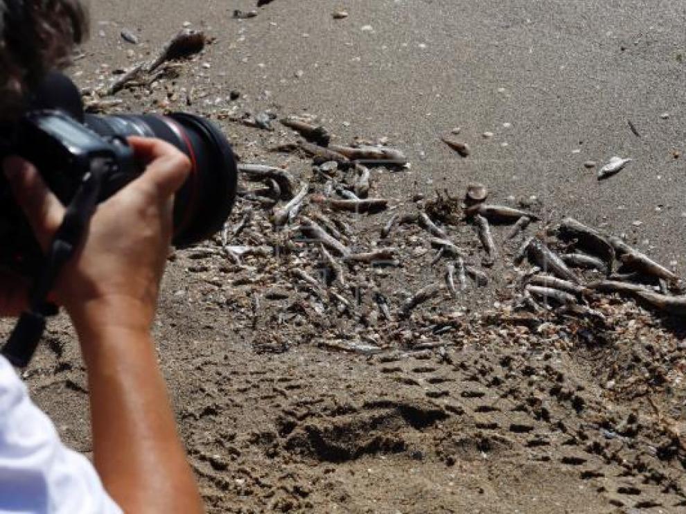 Peces muertos aparecen en las orillas de las playas del Mar Menor (Murcia)