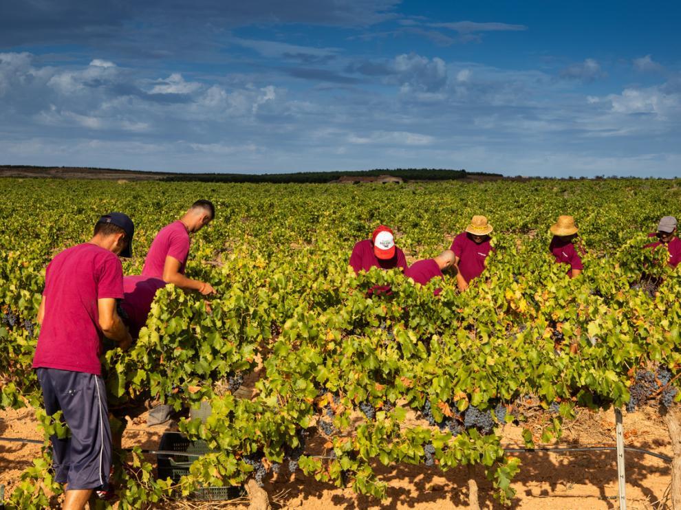 Aragón cuenta con más de 4.000 familias de viticultores y 36.000 hectáreas de viñedos.