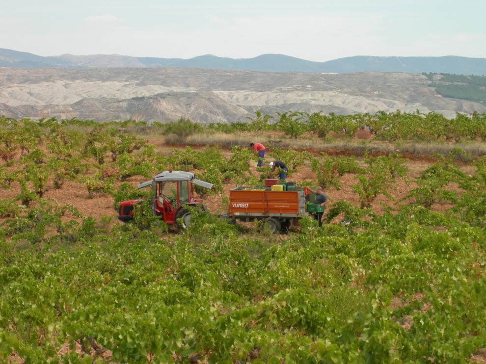La bodega tiene 10 hectáreas de viñedos con unas 18.000 cepas de garnacha de entre 45 y 100 años.