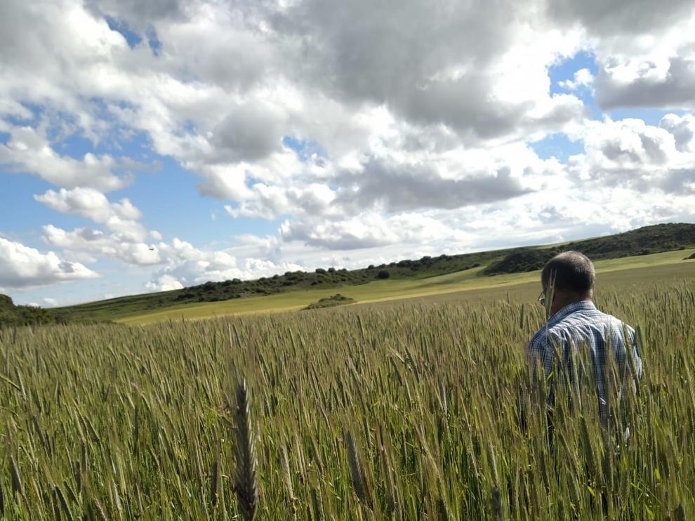 Aragón cuenta con más de 1.200 operadores de productos ecológicos, cultivados en unas 70.000 hectáreas de superficie.