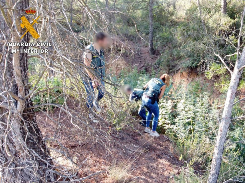 Desmantelada en Mequinenza una plantación de marihuana