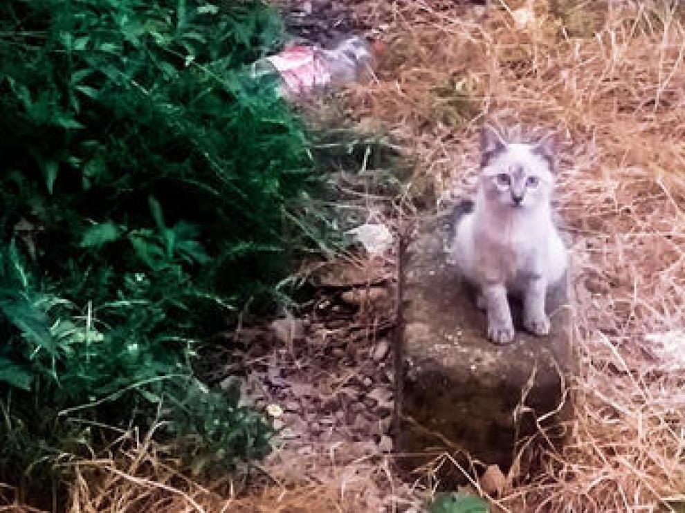 La Asociación denuncia que la colonia de gatos del polígono de Harineras corre peligro ante el inicio de las obras