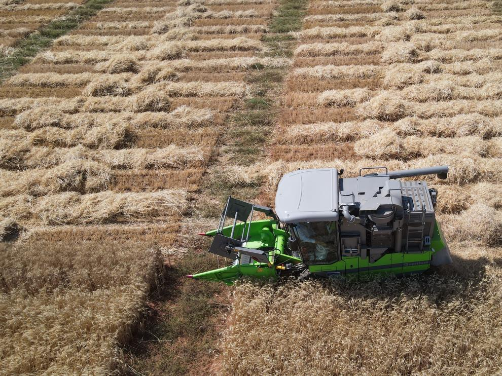 Un momento de la cosecha de cereal de invierno en una finca de Visiedo (Teruel).