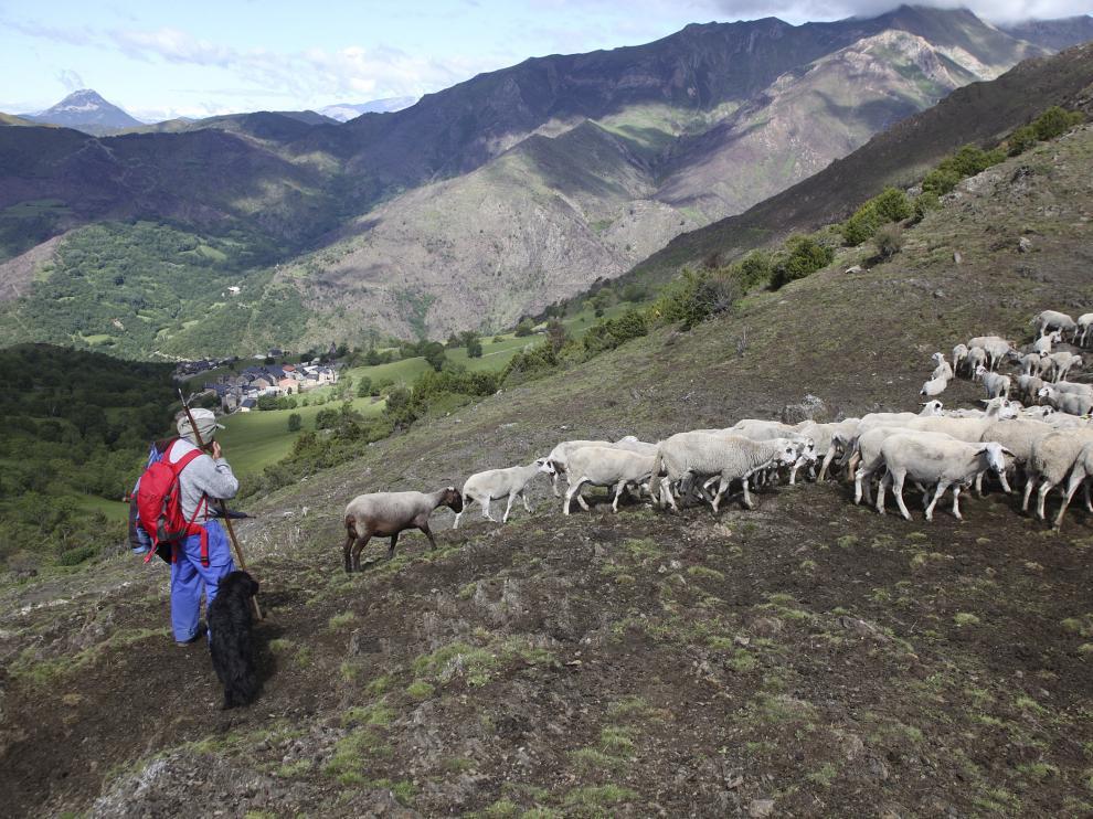 De los 184 grupos operativos que se han desarrollado en Aragón, 64 trabajan en el sector ganadero.