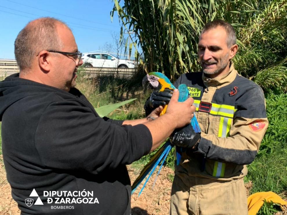 El rescate de un guacamayo por los Bomberos de la Diputación de Zaragoza.