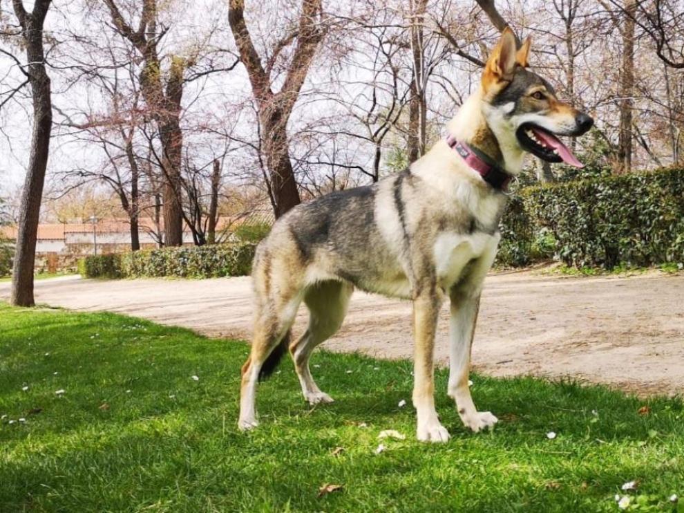 Una imagen de Kira, la perra desaparecida en Aguarón