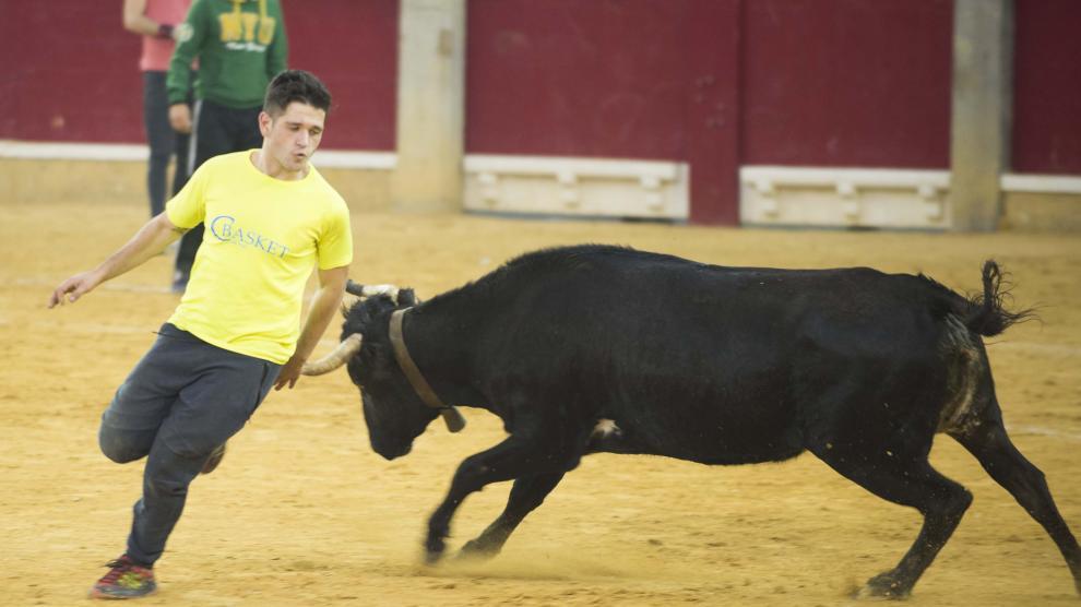 Revolcones, quiebros y saltos en la segunda jornada de vaquillas