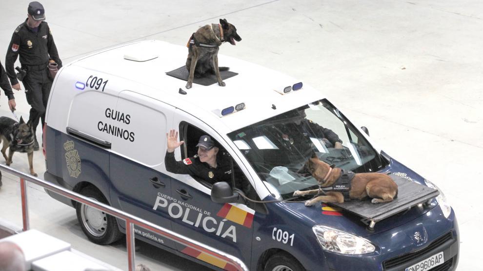 Exhibición de la Policía Nacional ante 4.000 estudiantes de centros educativos de Zaragoza y Calatayud.