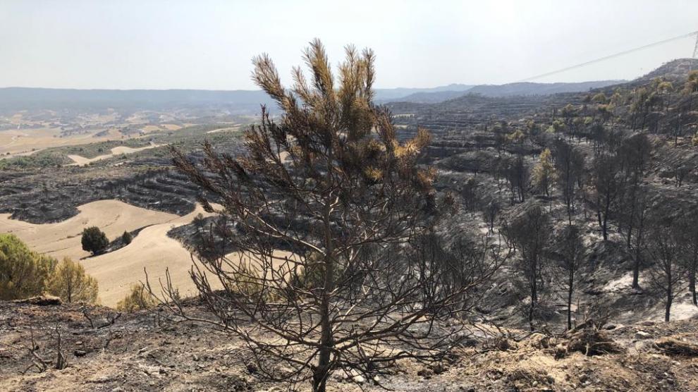 El incendio en la Sierra de Alcubierre ha quemado 1.200 hectáreas