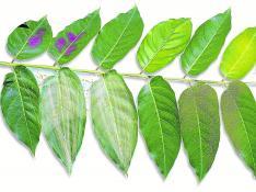 Imagen enfermedades plantas
